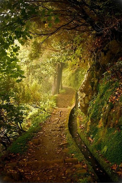 Forest Trail, Plitvice, Croatia. This looks like it should be in a fairy tale book!