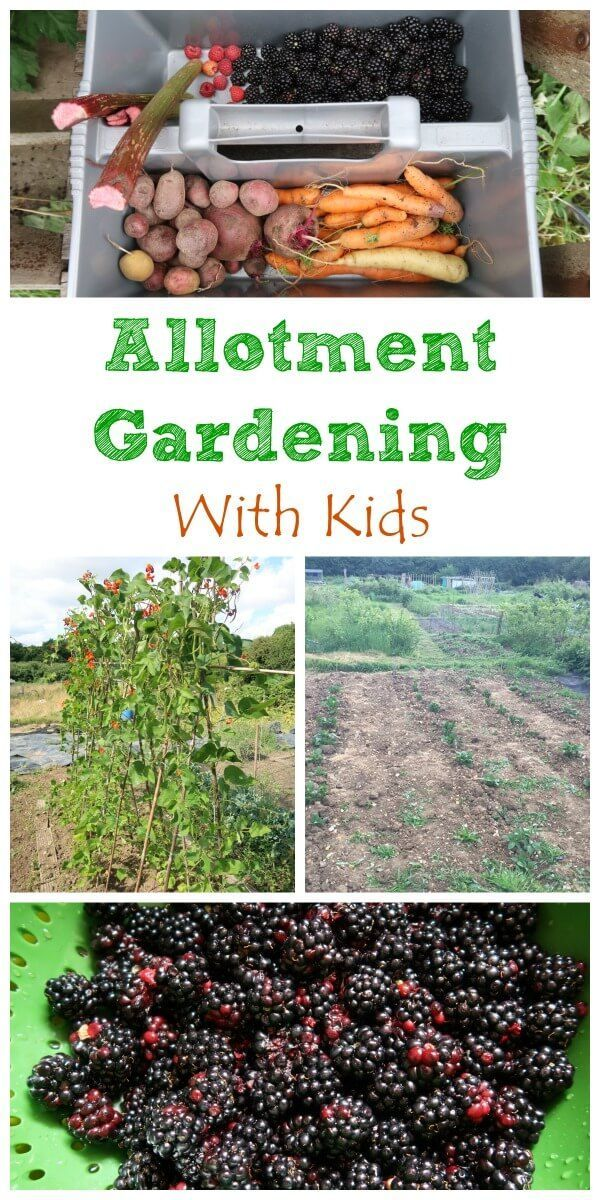 The benefits of growing food with kids and how gardening on an family allotment can help encourage healthy eating - Eats Amazing UK