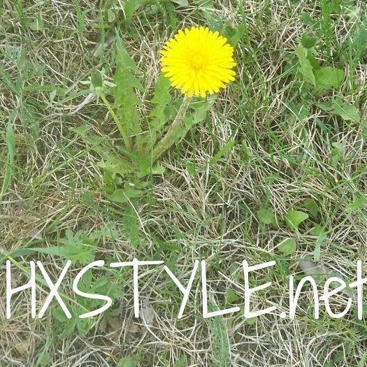 LUONTO. KEVÄT ja KESÄ...Luonnon Kukat, kasvit...VOIKUKKA. ISOMPI ja kasvaa myöhemmin kuin Leskenlehti. KUVA otettu Keväällä. Minun ELÄMÄNTAPA&Tyyli 💓💡 Näitä kerättiin ja tehtiin Voikukkaseppeleitä Lapsuudessa. Myös Koti Puutarhurin riesa, leviävät helposti. #elämäntapa #blogi #luonto #kevät #kesä #kukat #kasvit #liikunta #ulkoilu #tykkään 🌼💓💡🌞☺👣👀📷😉📚🔑🙋