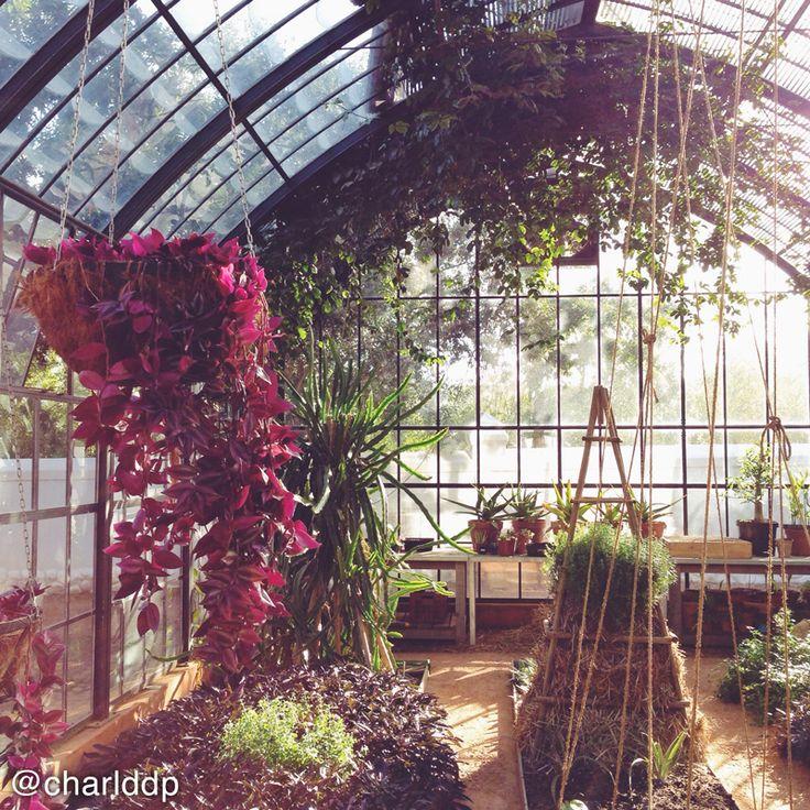 The glass house at Babylonstoren // Amazing light // Hanging plants. Photo by instagram.com/charlddp