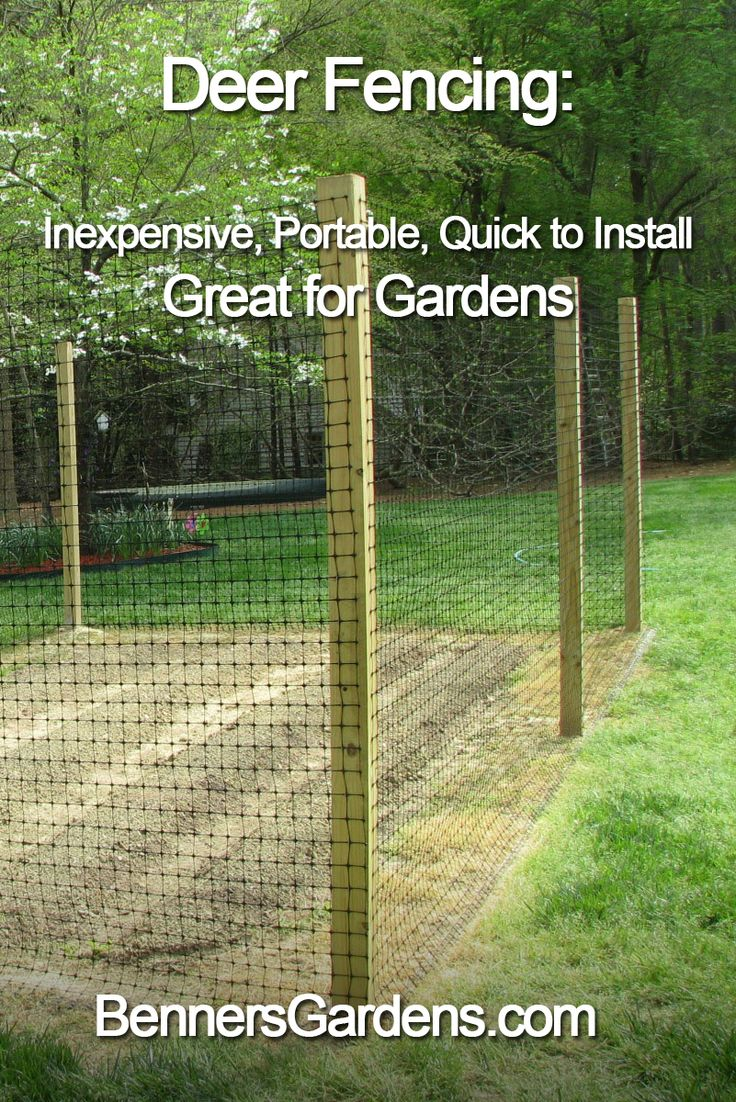 Vegetable garden deer fence ideas - Deer Are Creatures Of Habit And If They Re Used To Munching In Your Yard