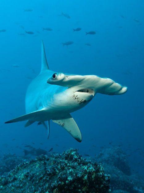 278 best florida new smyrna beach images on pinterest for Deep sea fishing new smyrna