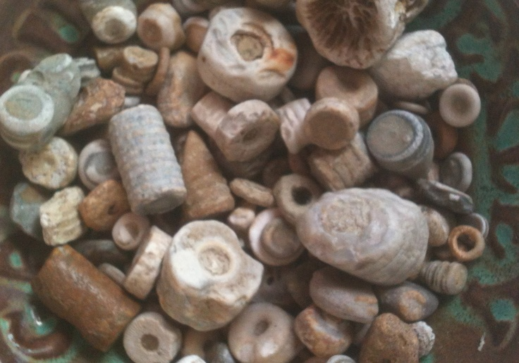 Beach Rock Jar >> my crinoid collection all from the beaches of Lake Michigan | fossils | Pinterest | Lake ...
