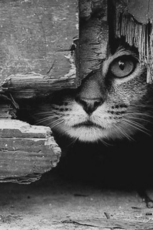 "Photo of ""Cat peeking through"" = Outstanding composition, textures, contrast lighting, & aliveness!"
