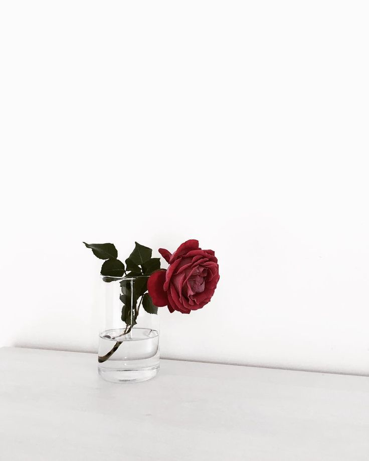 """Here, I got you a rose""  He says as he sets it onto the counter ""Bye Y/N""   -___ Ryan"