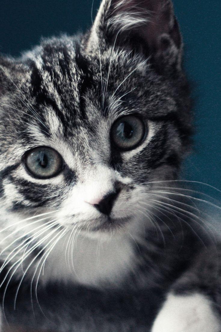 Cute Black And White Kitten Black And White Kittens Kitten Wallpaper White Kittens