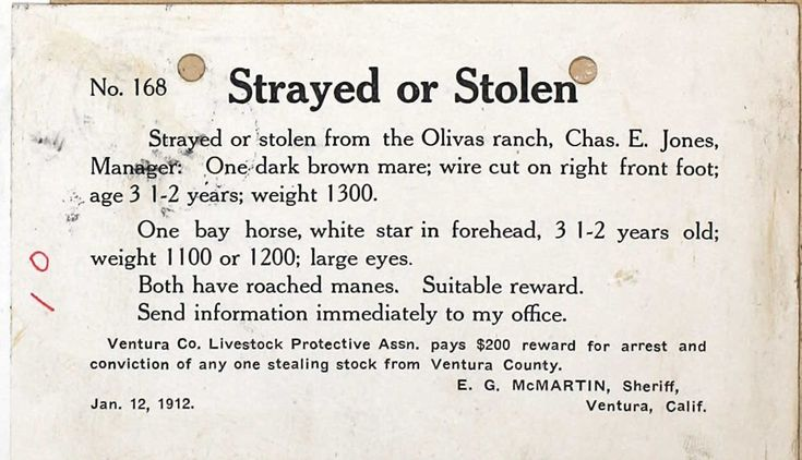 Strayed or Stolen One Bay Horse