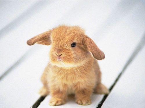 A baby rabbit (kit)