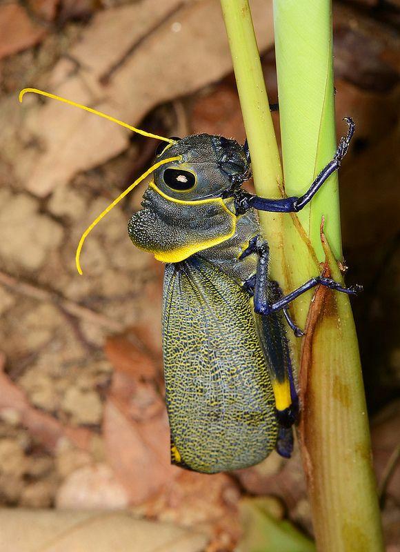 Aposematic Grasshopper by Arthur Anker