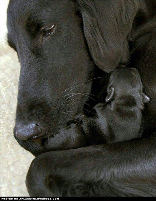 Mamma dog and baby puppy