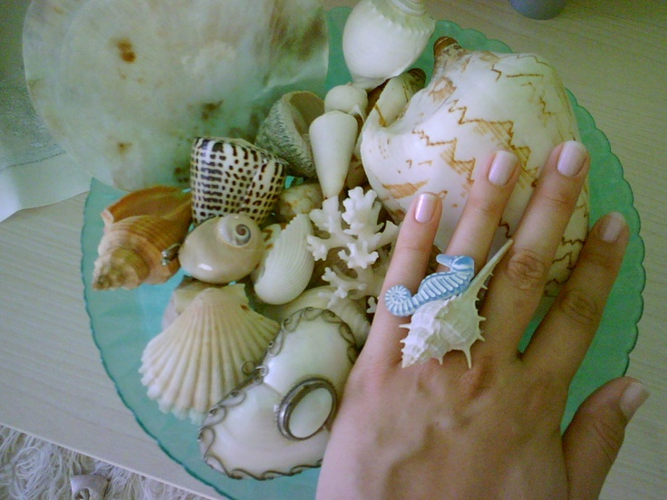 49 best seashell all the things you can make out of them