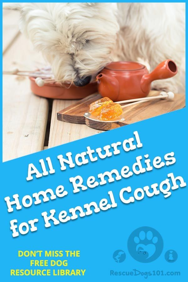 Easy And Natural Home Remedies For Kennel Cough Pet Blogger