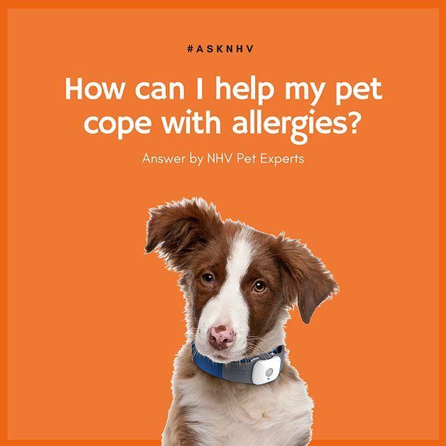 This Week S Asknhv Q30 How Do I Help My Pet Cope With Allergies