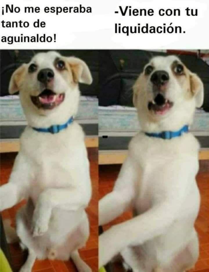 Pin By Wen Matheu On Funny Puppies Puppies Funny Labrador Retriever Retriever