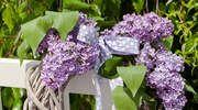 Orgován je so svojimi voňavými kvetmi žiadaná medonosná rastlina. Avšak nielen včely naň letia. Nechajte sa inšpirovať našimi tipmi na intenzívne voňavý orgovánový dekor.