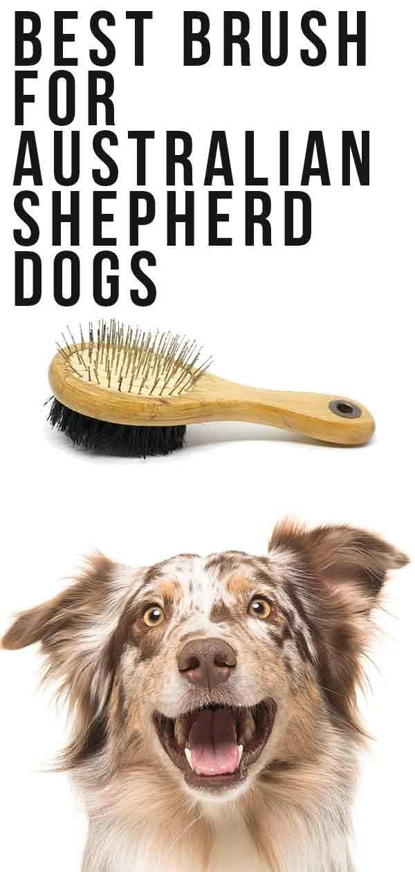 Best Brush for Australian Shepherd Dogs: Keep Him Looking His Best