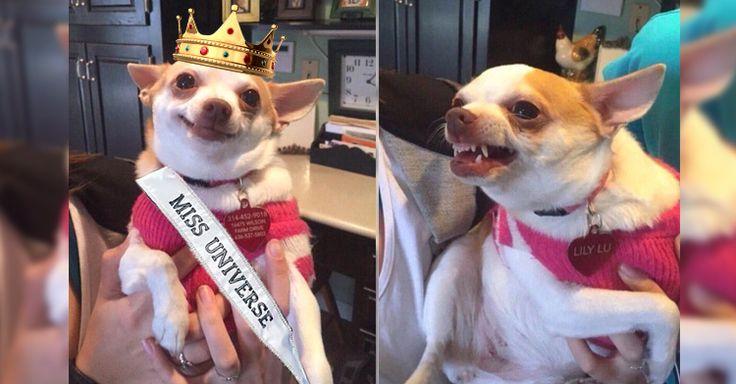 Después del error en la coronación de Miss Universo 2015 los memes, burlas y comentarios al respecto inundaron las redes sociales y aquí tenemos los mejores.