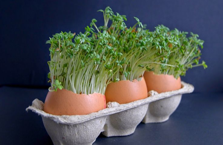szczypta smaQ: Weekendowe śniadanie - świąteczne jaja