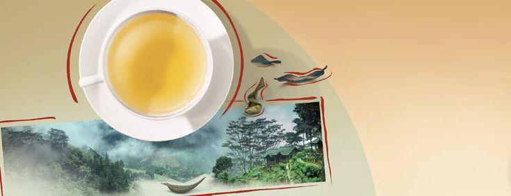 Scoprite tutto sulla preparazione della perfetta tazza di tè e godetevi la qualità superiore Julius Meinl.