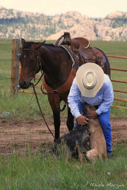 cowboy with his horse and his dogs.