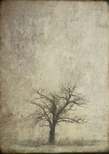 Digital photography by Jamie Heiden...very evocative, magical. This is Something Good This Way Comes: