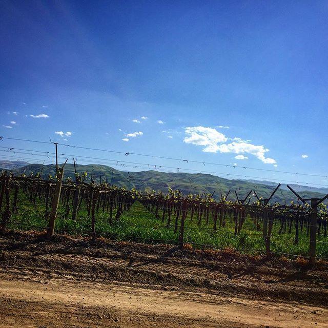Kalifornia Dreamin' - #Wein soweit das Auge reicht… gesehen im Central Valley in Kalifornien.    Wir lieben das Potential von Kaliforniens #Lodi AVA...Was ist Dein #Lieblingswein aus #Kalifornien?  .  .  .  .  .  #California #wine #wein #vin #vino #travel #instatravel #lodiwine #wino #wineoclock #sommelier #kalifornia #winephotography #kalifornien #reisen #reise #weinwanderung #weingut #reben #buyboonwein