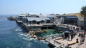 Monterey Aquarium - Monterey, CA Attack Aircraft Carriers, Places To Visit, Monterey Bays Aquariums, Favorite Places, Monterey Aquariums, Monterey California, Aquariums California, Amazing Places, California Coast