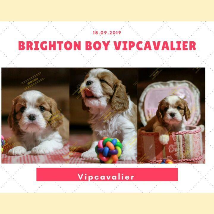 Brighton Boy Dogs Skinny Dog Dog Breeds