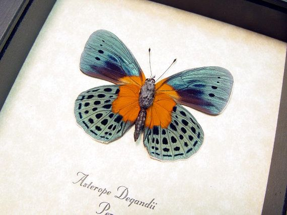how to make a butterfly patch drywall