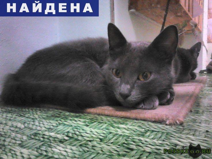 Найден кот, русский голубой г.Мытищи http://poiskzoo.ru/board/read31644.html  POISKZOO.RU/31644 Кот, но возможно не полноценный. Появился в сентябре. На груди несколько белых волосков. Очень ласковый.   РЕПОСТ! @POISKZOO2 #POISKZOO.RU #Найдена #кошка #Найдена_кошка #НайденаКошка #Мытищи