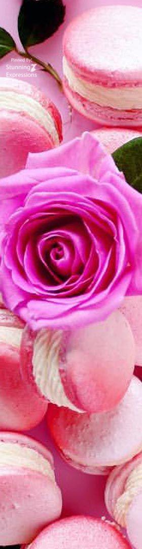 Rose Champagne Macarons