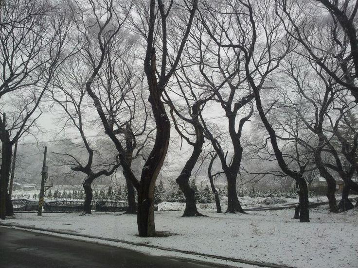 눈오는날오후