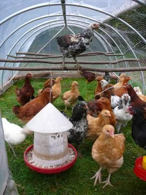 possible Idea for summer meat chickens half covered hoop houses? Would they