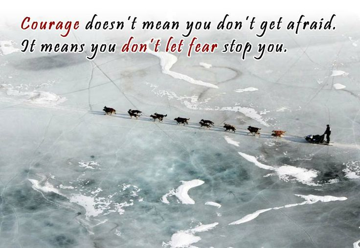 Courage is not lack of fear... #disability #mushing #dogteam #iditarod #inspirational #husky #dogsled