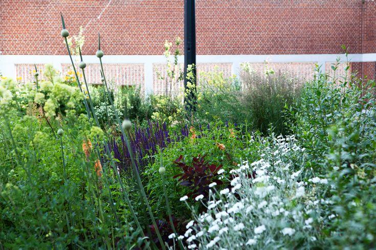 Inrichtingsplan Gevangenis Gent – HOF tuinarchitecten  wilde bloemen door elkaar
