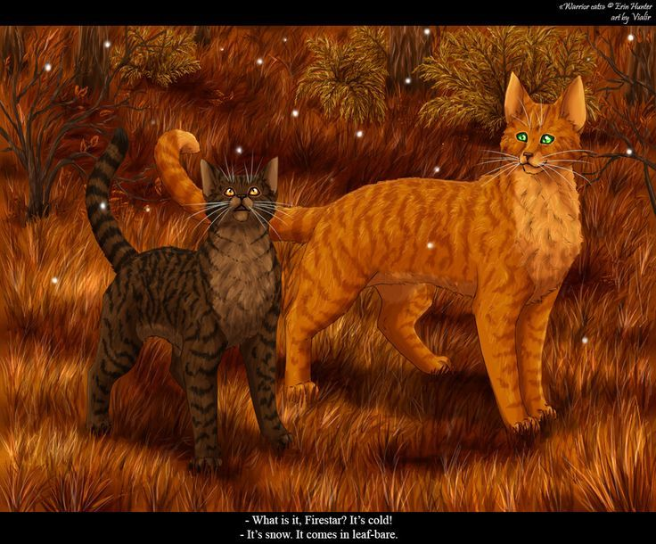 Bramblepaw And Firestar Quot Leaf Bare Is Arriving Quot Warrior