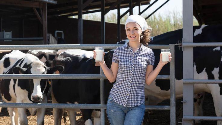 Wat is het verschil tussen gepasteuriseerde of rauwe melk? | Bioplaza Overpelt