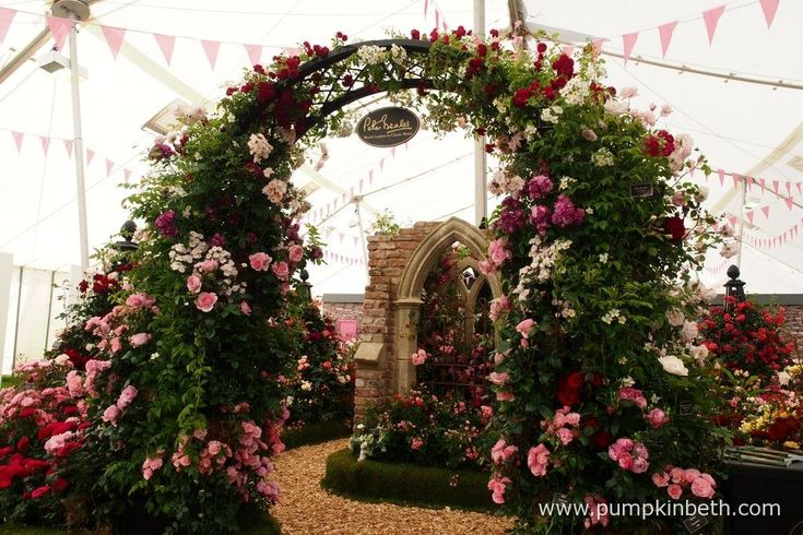 Peter Beales Roses exhibit inside The Festival of Roses Marquee, was chosen by the RHS judges as the Best Rose Exhibit, at the RHS Hampton Court Palace Flower Show 2016.