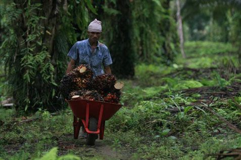 "Presiden terpilih Joko Widodo mendorong tiga bank pelat merah Mandiri, BNI dan BRI menyalurkan kredit petani sawit di Riau. Jokowi mengatakan hal tersebut setelah mendengar aspirasi petani sawit di Riau soal revitalisasi perkebunan. Petani meminta kepada pemerintah memberikan subsidi bunga. ""Ya nanti saya dorong bank Mandiri, BNI, BRI untuk menuju Riau. Bunganya dihitung dulu belum dilantik,"" katanya disela-sela"