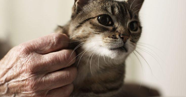 Quanto tempo os gatos podem ficar sem urinar?. O sistema urinário de um gato nunca para de trabalhar. Normalmente, um gato tem a necessidade de urinar várias vezes ao dia. Os alimentos e líquidos ingeridos pelo animal são levados primeiro para o sistema digestivo, mas, em seguida, os resíduos são filtrados pelos nefrônios, as unidades funcionais do rim de um gato. Após isso, os resíduos são ...