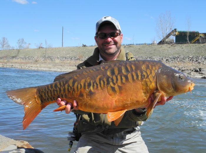 17 best images about carp fishing on pinterest carp for Can fish drown
