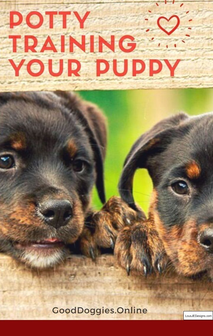 Dog Training Tips For Doberman And Pics Of How To Train Dog To