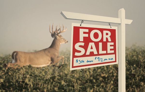 Wise Acres: How to Buy a Whitetail Deer Hunting Property | Outdoor Life