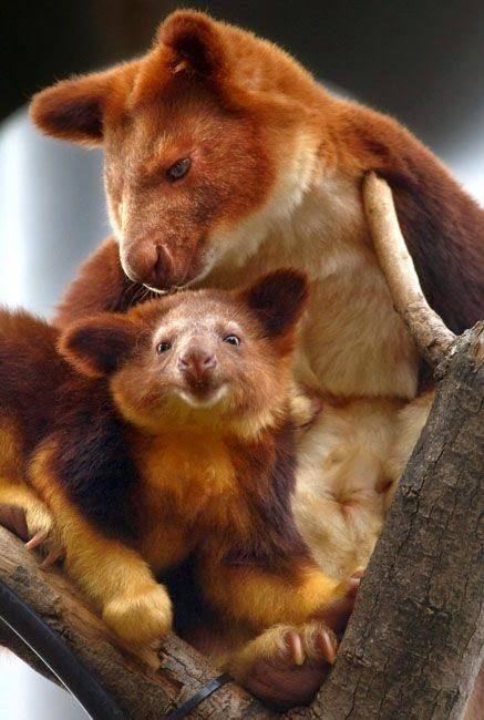 Galeria Animal - 20 Bichos! - WILDLIFE #babyanimalphotos