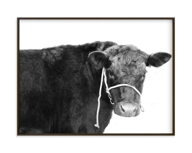 """black cow"" - Art Print by Baumbirdy in beautiful frame options and a variety of sizes."