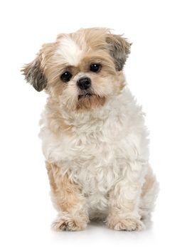 Dog-bob