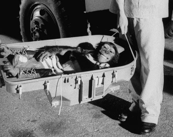 Ham the chimp returns to Earth following his historic 16 minute space flight in 1961.