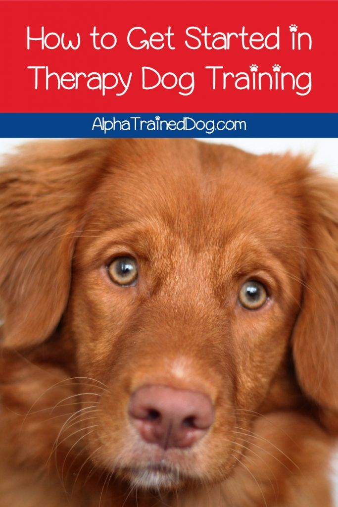 If You Re Thinking Of Giving Therapy Dog Training A Go Good For
