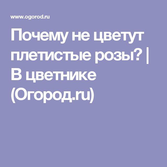 Почему не цветут плетистые розы?   В цветнике (Огород.ru)