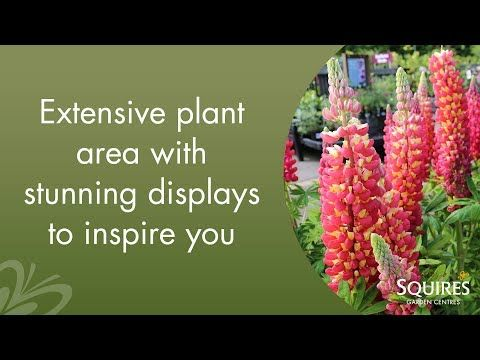 Squire's Badshot Lea  #Plant Area #Video.  Visit www.squiresgardencentres.co.uk to find out more!